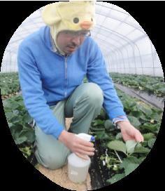 地元奈良で始めたイチゴ畑